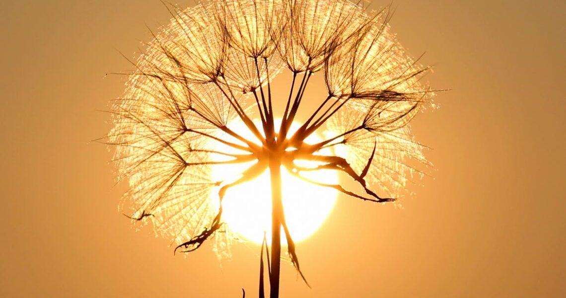 Essere Luce
